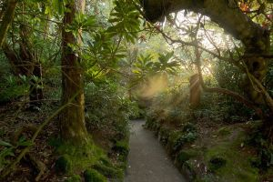 A path leads through the jungle at The Lost Gardens of Heligan, within driving distance of Highcliffe Holidays.
