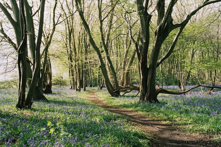 A dirt path leads through trees and woodland flowers near Highcliffe Holidays.